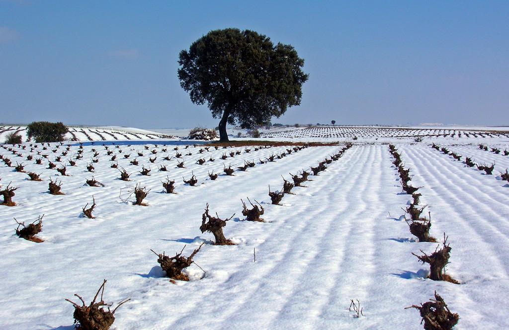 Ruta del Vino de Rueda08