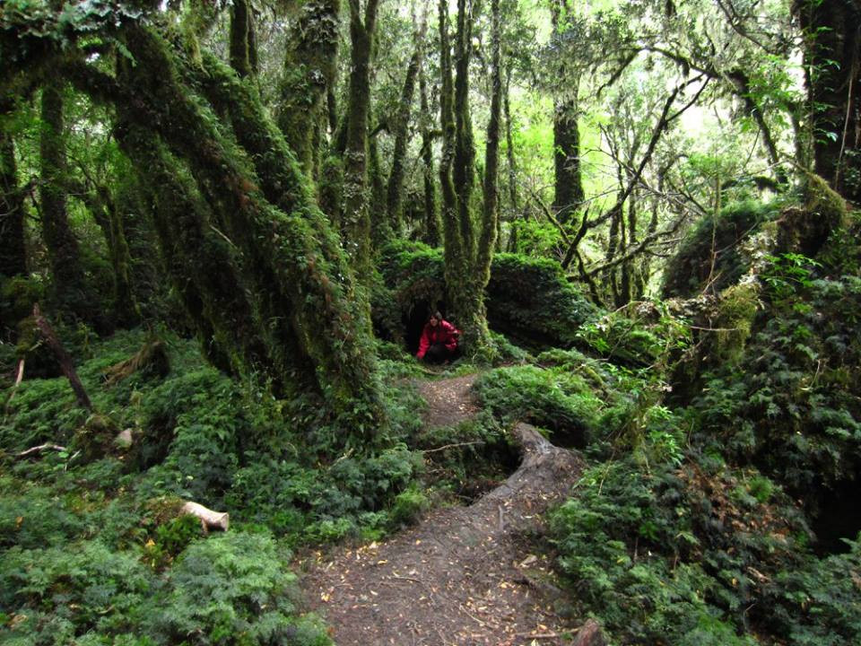 Bosque encantado, en Puerto Cisnes. Sur de chile
