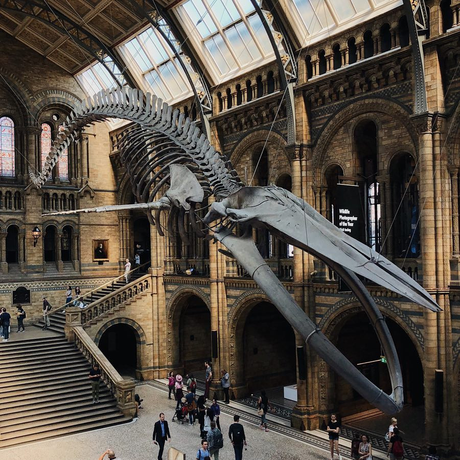 Natural history Museum London credit jackbenedwards